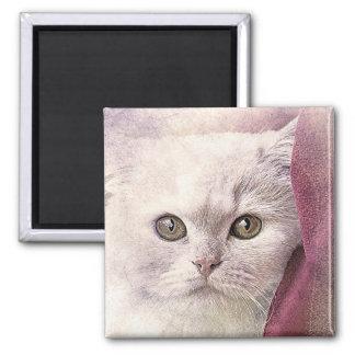 Imán Acuarela del extracto el | del gatito el | del