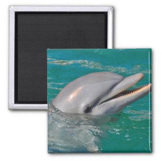 Imán Ascendente cercano del delfín