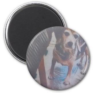Imán Beagle curioso