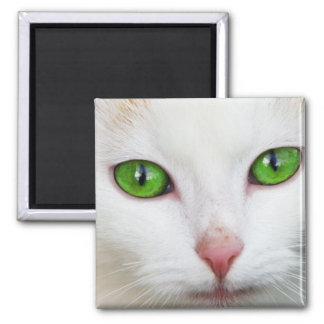 Imán blanco del cuadrado del gato
