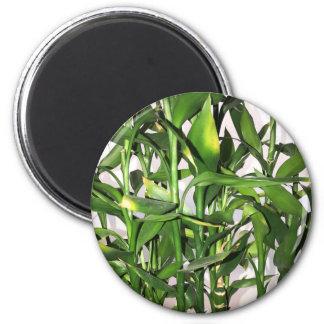 Imán Brotes y hojas verdes de bambú