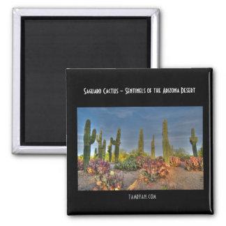 Imán - cactus del Saguaro - centinelas de Arizona