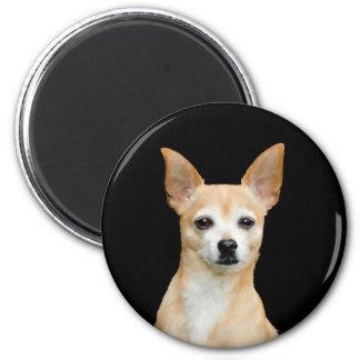 Imán Chihuahua pintada beige en fondo negro
