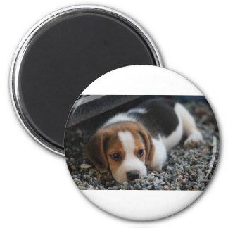 Imán Cierre del perro del beagle para arriba