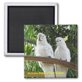 Imán Cockatoo con cresta del azufre australiano
