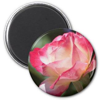 Imán color de rosa bonito del refrigerador