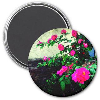 Imán Color de rosa rosado precioso