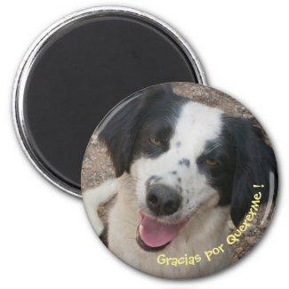 Imán con perro magnet
