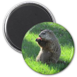 Imán Consumición de Groundhog