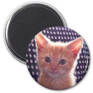 Imán Crema linda del rojo del gato del gatito