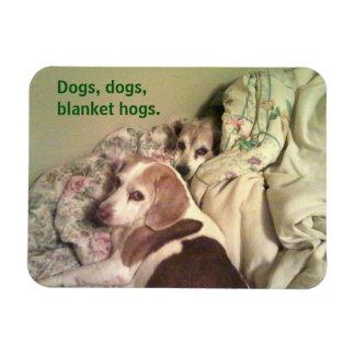 Imán de 3x4 de los cerdos combinados del beagle