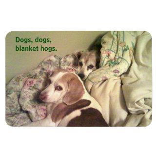 Imán de 4x6 de los cerdos combinados del beagle