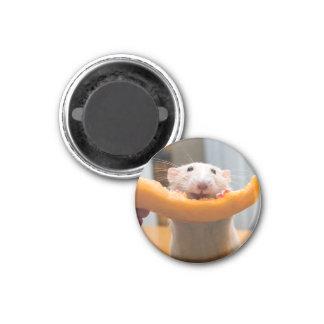 Imán de Canaloop del ratón de Marty