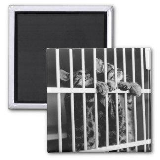 Imán de la cárcel del gatito