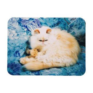 Imán de la foto del gato persa
