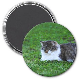 Imán de la fotografía del gato del tiempo de la si