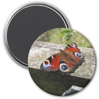 Imán de la mariposa de pavo real