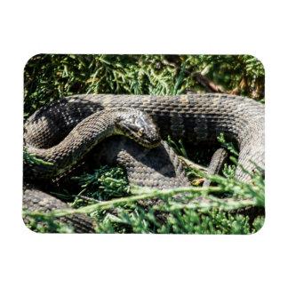 Imán de la serpiente