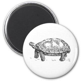 Imán de la tortuga/de la tortuga