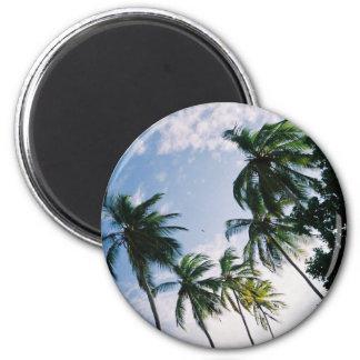 Imán de las palmeras