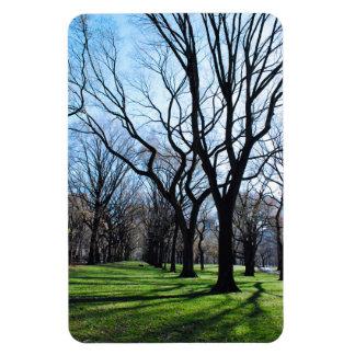 Imán de los árboles de olmo americano