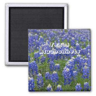 Imán de los Bluebonnets de la flor de estado de