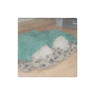Imán De Piedra 2 Sleepy_Bichon_Puppies