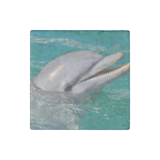 Imán De Piedra Ascendente cercano del delfín