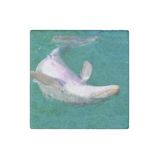 Imán De Piedra Delfín de Bottlenose al revés