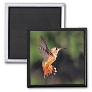 Imán del colibrí