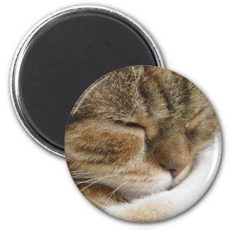 Imán del gato el dormir