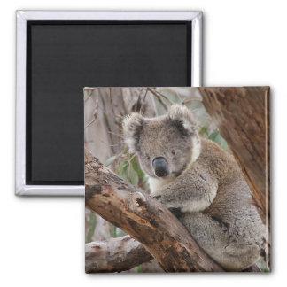 Imán del oso de koala
