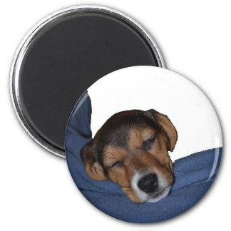 Imán del perrito del beagle el dormir