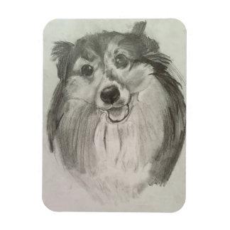 Imán del perro pastor de Shetland