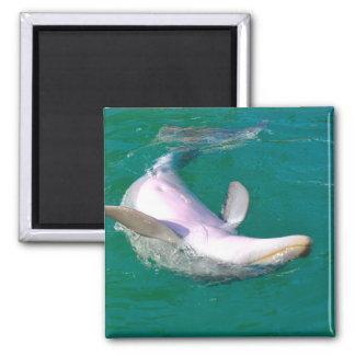 Imán Delfín de Bottlenose al revés