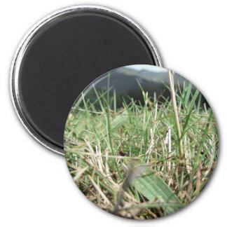 Imán Dentro de, la hierba verde enorme brota por todas