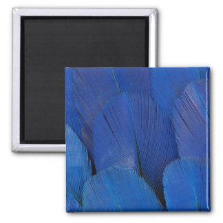 Imán Diseño azul de la pluma del Macaw del jacinto