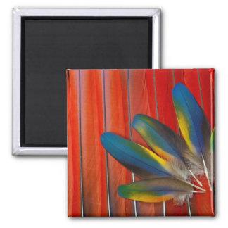 Imán Diseño de la pluma del Macaw del escarlata