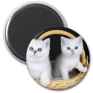 Imán Dos gatitos blancos en cesta en background.JP