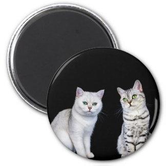Imán Dos gatos británicos del pelo corto en fondo negro