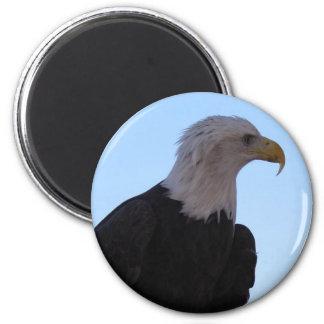 Imán Eagle calvo