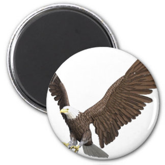 Imán Eagle calvo que viene adentro para un aterrizaje