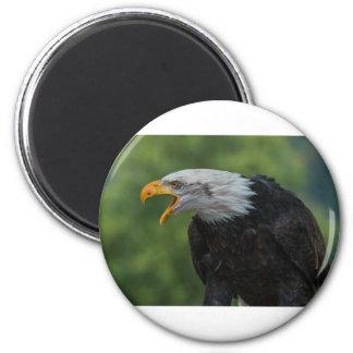Imán Eagle negro blanco durante d3ia