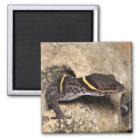 Imán El gecko de Lichtenfelder