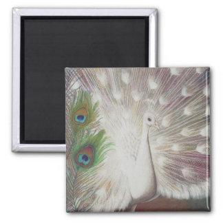 Imán El pavo real blanco y el arte verde de la pluma