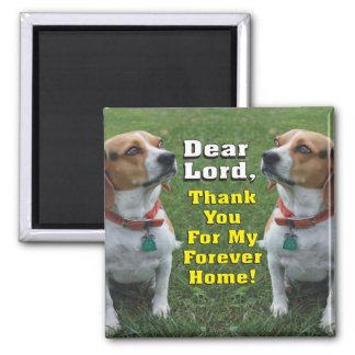 Imán El rezo del beagle