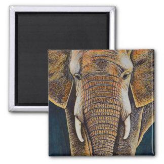 Imán Elefante africano