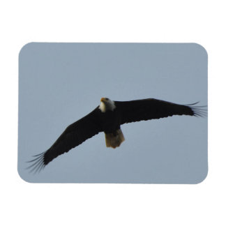 Iman Elevación de Eagle calvo