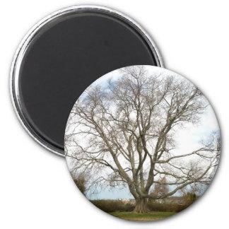 Imán Espacio en blanco - Wisdom Tree