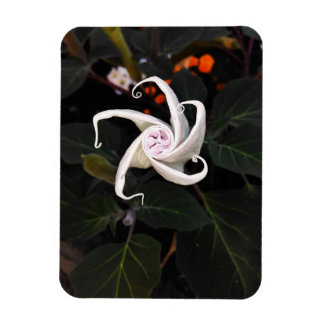 Imán Flexible Brote de flor de la datura